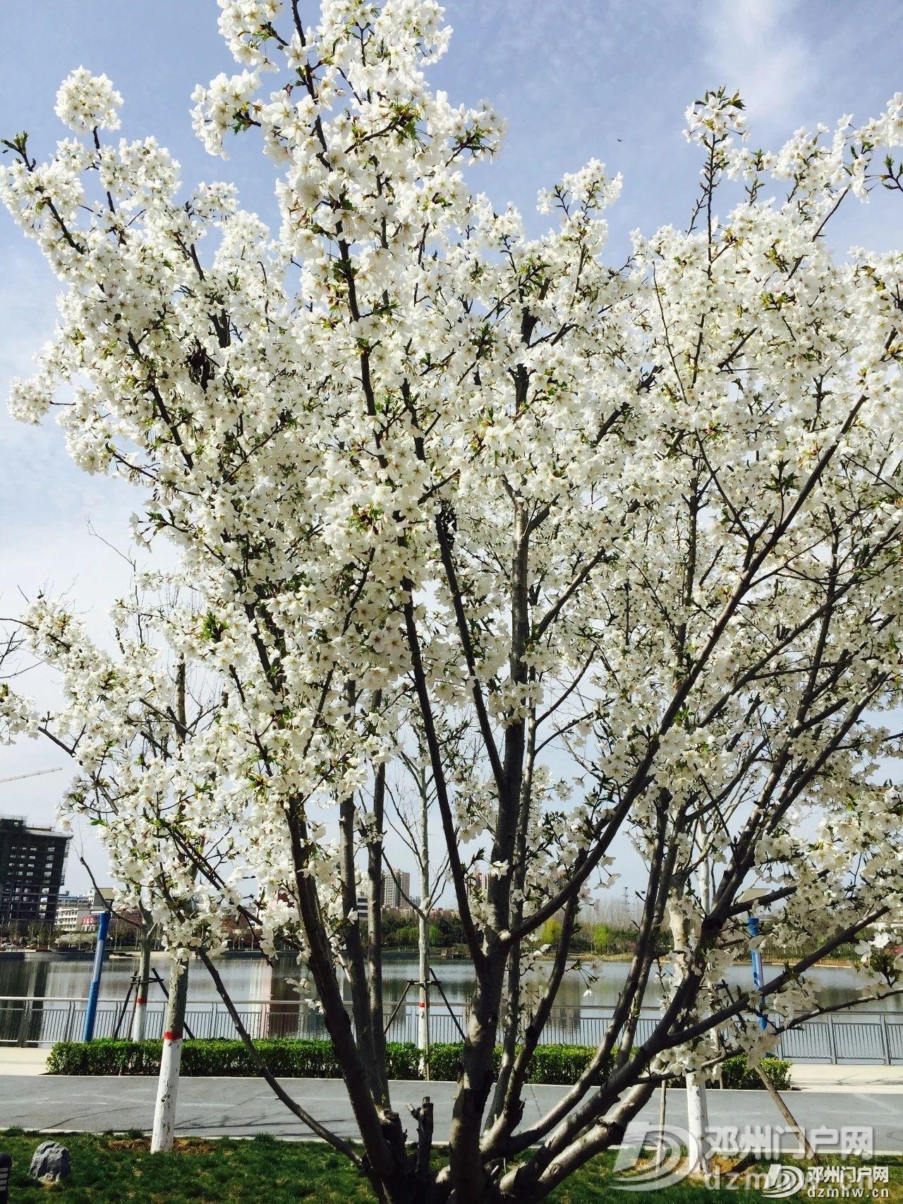 春暖花开,邓州,久等了! - 邓州门户网|邓州网 - 74f1a68951153e0241d70851bf0c5e94.jpg