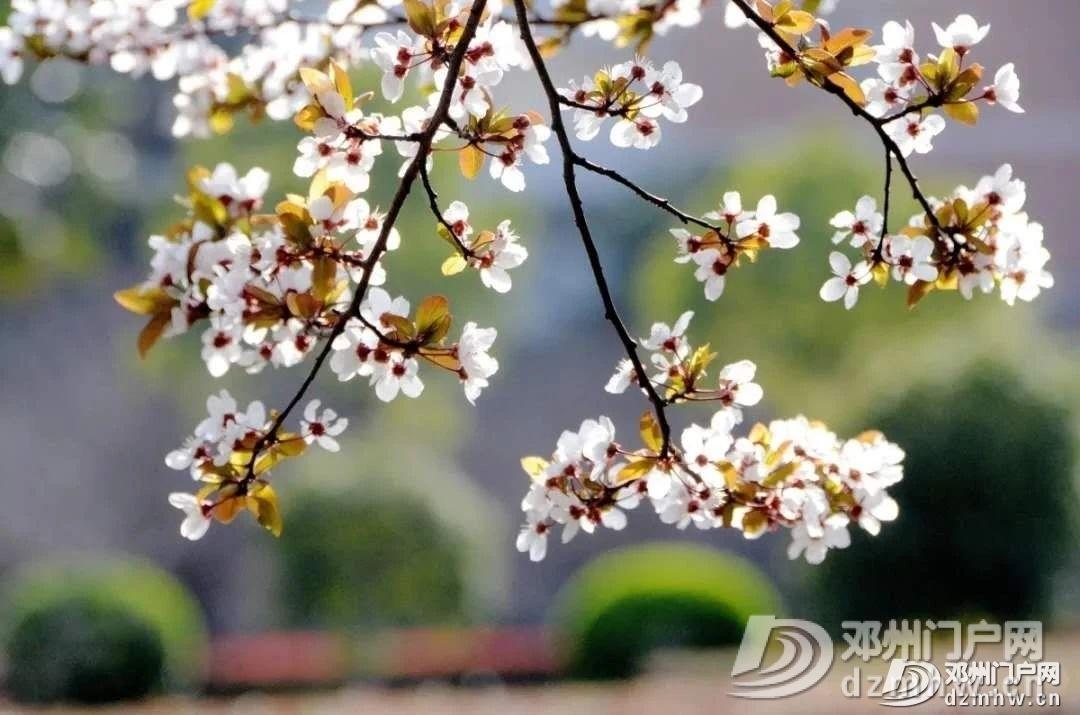 邓州气温再次回到20° - 邓州门户网|邓州网 - ea8b3ed1bb331c757c7935b4a0e45d4d.jpg