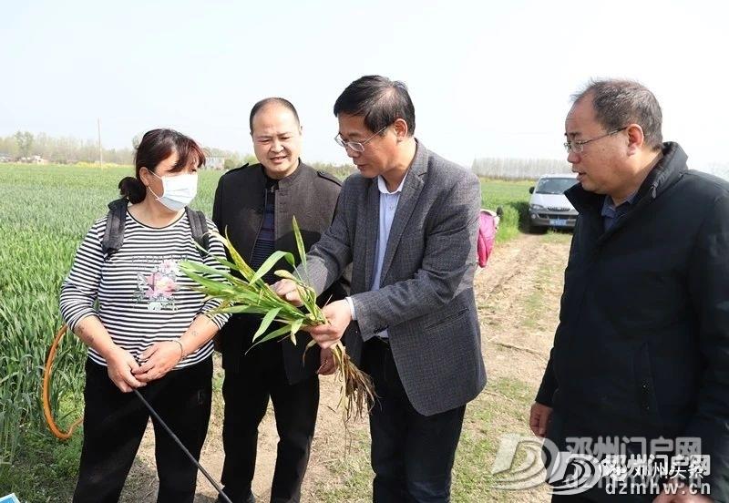 警惕!邓州小麦条锈病可能威胁粮食产量减产30%以上! - 邓州门户网|邓州网 - 3258ba9fe0a9576f73028186d6471183.jpg