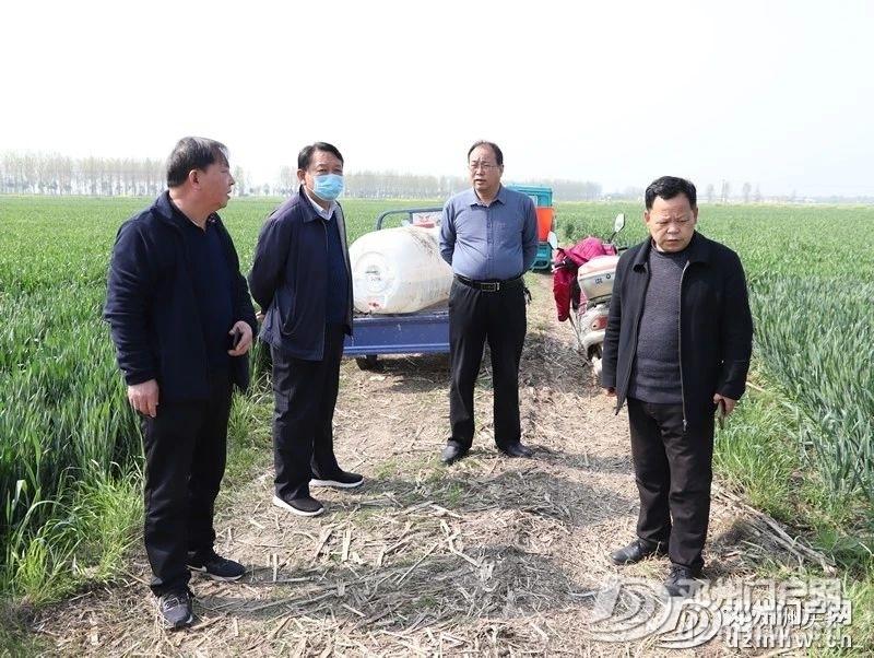 警惕!邓州小麦条锈病可能威胁粮食产量减产30%以上! - 邓州门户网|邓州网 - 53295885ae7671e2e5286546c4b6af06.jpg