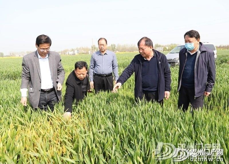 警惕!邓州小麦条锈病可能威胁粮食产量减产30%以上! - 邓州门户网|邓州网 - 9ca0140181cfcb76723f80386dfdc282.jpg