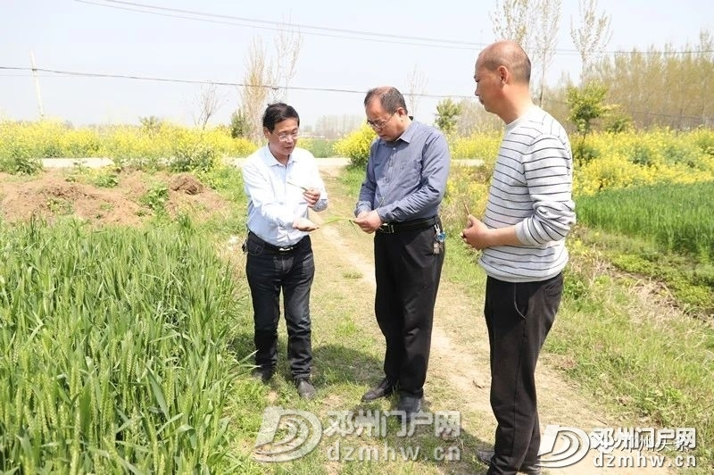 警惕!邓州小麦条锈病可能威胁粮食产量减产30%以上! - 邓州门户网|邓州网 - 3395dedf95957f7e439d5752159c7f24.jpg