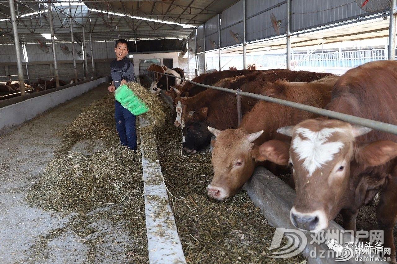 【 聚焦乡村振兴】邓州这个乡致富能手的新种养模式,快来了解一下! - 邓州门户网|邓州网 - 16697e38cbebd3b6e46d9d8a1ad44b01.jpg