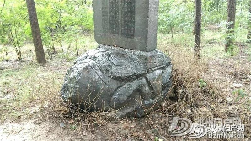 树林里有一龟驮古墓碑:原来是明代邓州籍治世良臣之墓! - 邓州门户网|邓州网 - 8ca79698c89a4889a25ea066a4766dc3.jpg