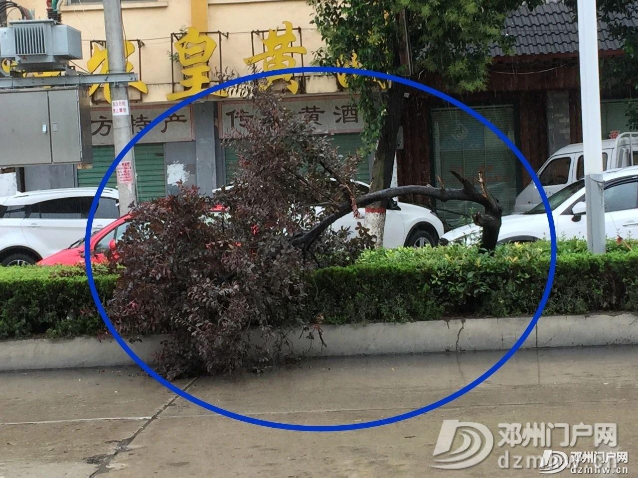 实拍!这就是今天的邓州:狂风暴雨,大树掀翻、道路被堵!已发布暴雨黄色预警... - 邓州门户网|邓州网 - edcb6ffbc2a0a54c517d20d9cde4378b.jpg