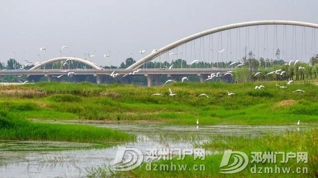 惊奇!邓州这个湖,你见过吗? - 邓州门户网|邓州网 - cdb4624b59a86024b1ead80b92f6e0e8.jpg
