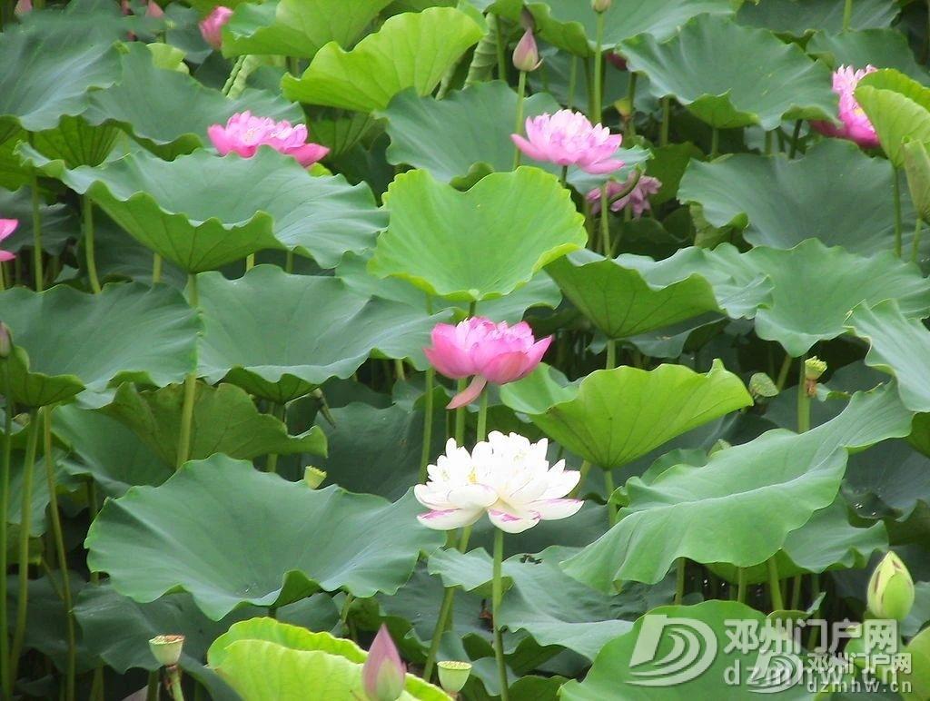 惊奇!邓州这个湖,你见过吗? - 邓州门户网|邓州网 - a3eafe615d3f4e01da6e7158fc85104c.jpg