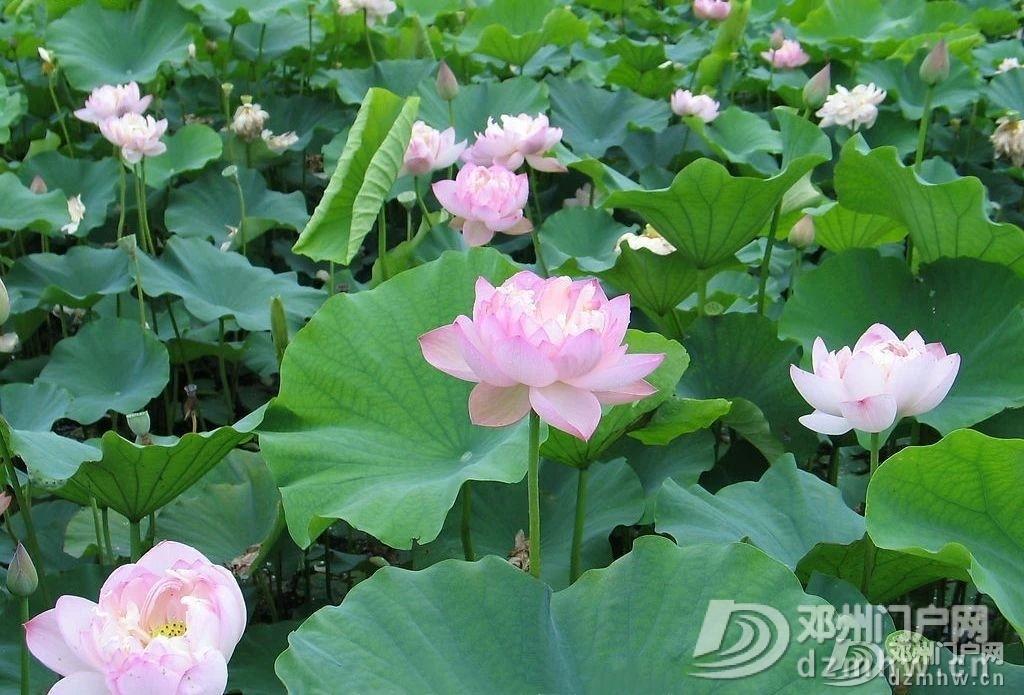 惊奇!邓州这个湖,你见过吗? - 邓州门户网|邓州网 - 3b81836ee3fc2791968867540f6fe0f4.jpg