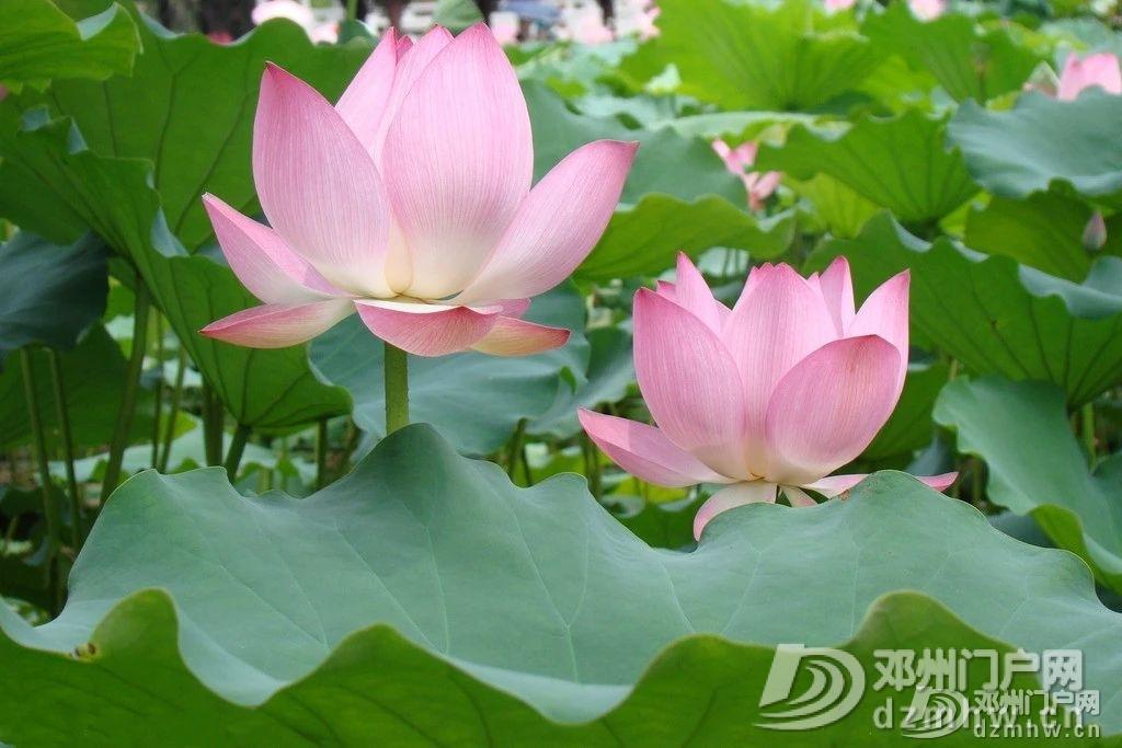 惊奇!邓州这个湖,你见过吗? - 邓州门户网|邓州网 - 6fa913543eb77522f2f1bbe07cb771a2.jpg