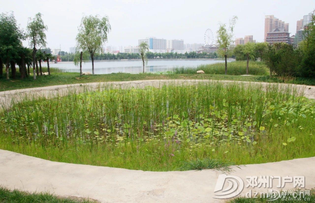 惊奇!邓州这个湖,你见过吗? - 邓州门户网|邓州网 - 90ddcf21de5fdde482104c89941573f8.jpg