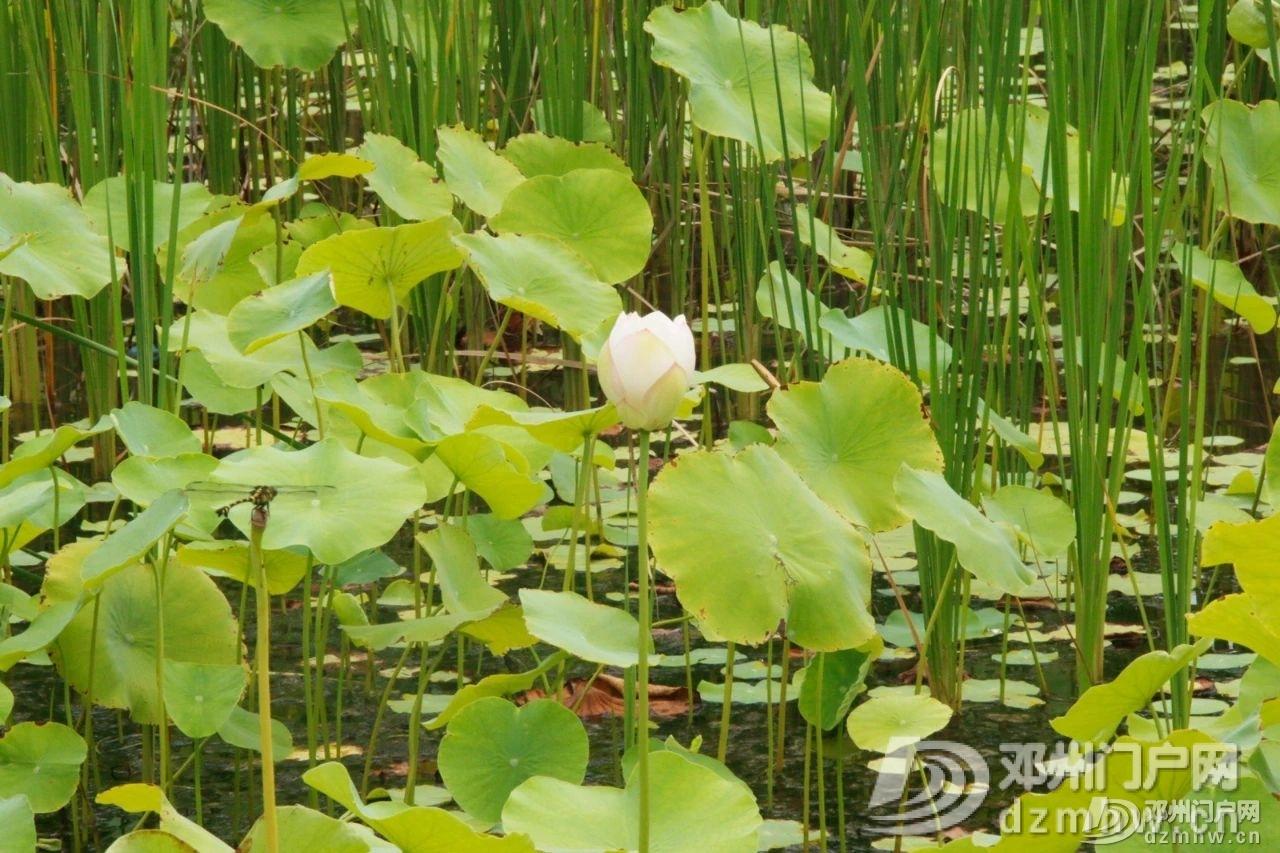 惊奇!邓州这个湖,你见过吗? - 邓州门户网|邓州网 - af0ba885cbcf1ba62ae56fb632691bcb.jpg
