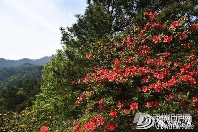 邓州这个项目列入2020年全省重点建设项目 - 邓州门户网|邓州网 - df98aa70c9e5ba82d1ede5dd071aa078.jpg