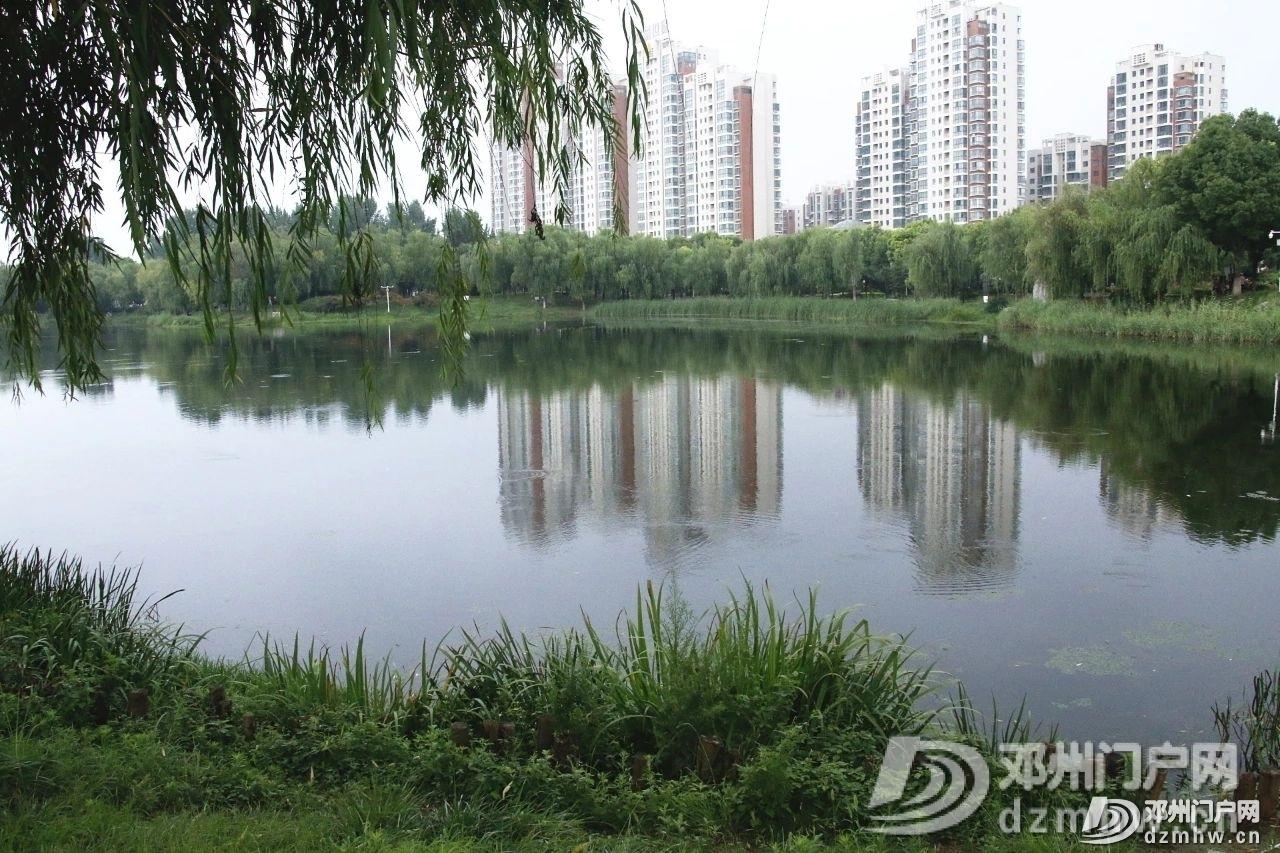 速来围观!暴雨过后的邓州人民公园竟发生了这种变化... - 邓州门户网|邓州网 - 93da9776d3de2aff2d6e3f240dccbb23.jpg