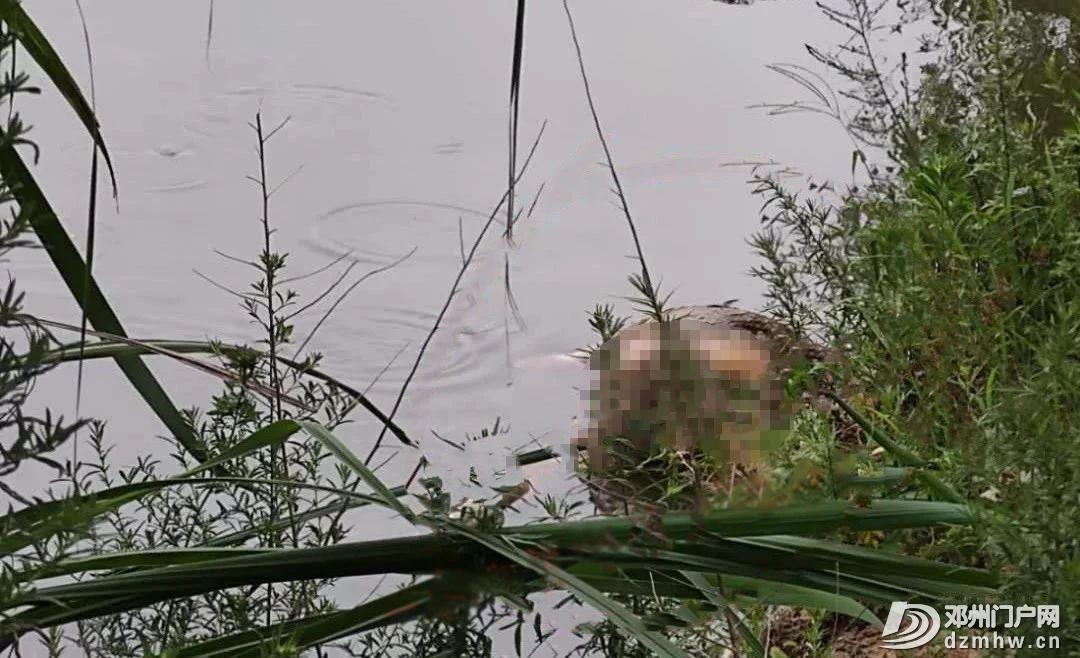 悲剧!邓州湍河发现一具男尸,系3天前走失男子.... - 邓州门户网|邓州网 - 33a567c39db1aaa5ffb2f63ebec4be8a.jpg
