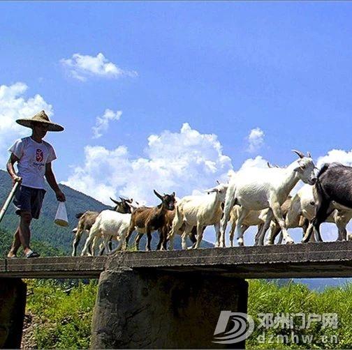 邓州这座距今2690年的楚长城,它的真实面目很多人已经... - 邓州门户网|邓州网 - 569d48ecce20d9c7facc03b3143d8459.jpg