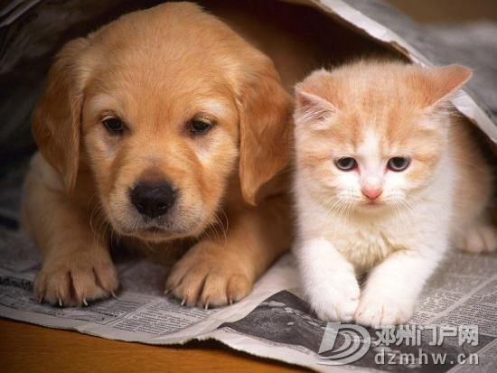 怀孕了,就别养猫狗了! - 邓州门户网|邓州网 - 154409yesnrrtee36hzt5q.jpg