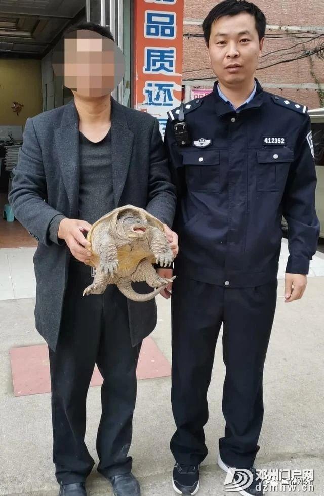 邓州市森林公安特别提醒:这种龟不宜放归大自然 - 邓州门户网|邓州网 - 38b706a7a7a5d8559bc7e1651ed7f0bc.jpg