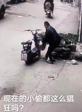 邓州大东关社区惊现偷花贼,监控实拍:搬上电动车,挖开走了……